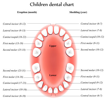 Tooth Eruption Chart - Pediatric Dentist in Newbury Park, CA